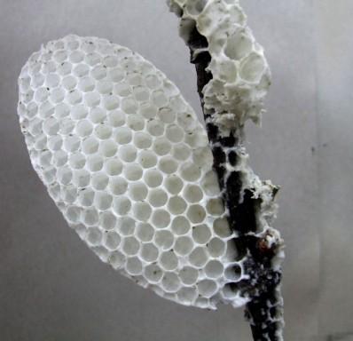 honeycomb desat
