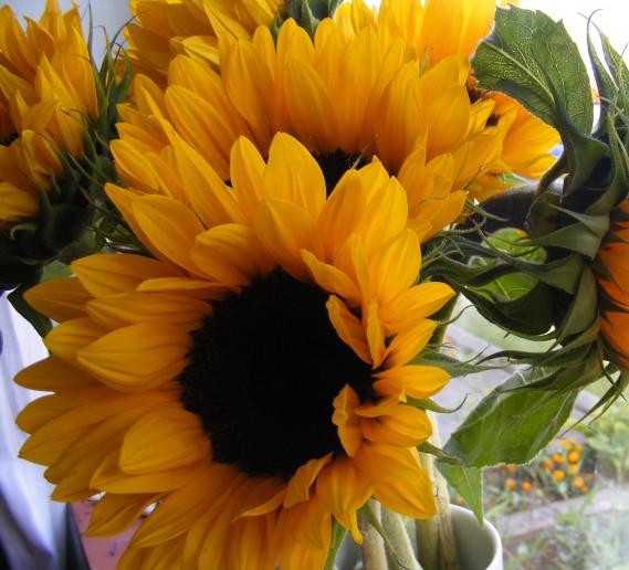 sun blog